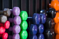 Dumbbells. On a rack in a fitness studio Stock Images