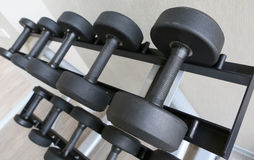 Dumbbells in gym Stock Images