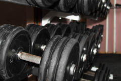 Dumbbells in a gym Stock Images