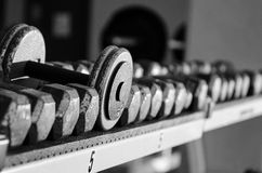 Dumbbells on a rack. Image of dumbbells sitting on a rack Royalty Free Stock Images
