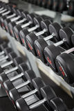 Dumbbells on the rack Royalty Free Stock Photo