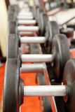dumbbells on a stand Royalty Free Stock Images