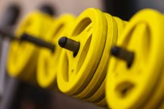 Dumbells pour la forme physique dans un support au gymnase Photographie stock libre de droits
