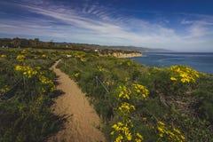 Dume Cove Spring Wildflowers. Beautiful yellow wildflowers blooming and covering Point Dume in springtime with coastline view of Dume Cove, Malibu, California Stock Photography