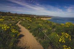 Dume Cove Spring Wildflowers. Beautiful yellow wildflowers blooming and covering Point Dume in springtime with coastline view of Dume Cove, Malibu, California Stock Photos