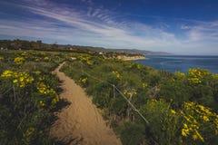 Dume Cove Spring Wildflowers. Beautiful yellow wildflowers blooming and covering Point Dume in springtime with coastline view of Dume Cove, Malibu, California Royalty Free Stock Image