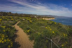 Dume Cove Spring Wildflowers. Beautiful yellow wildflowers blooming and covering Point Dume in springtime with coastline view of Dume Cove, Malibu, California Royalty Free Stock Photography