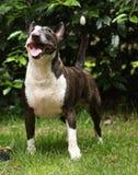 Dummer Hund Stockfotografie
