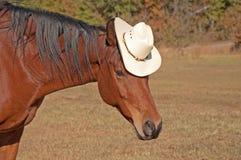 Dummes Bild eines Pferds, das einen Cowboyhut trägt Lizenzfreies Stockbild