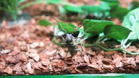 Dummes Gesicht eines Käfers stock video