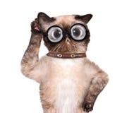 Dummes Katzenhören vorsichtig mit einem sehr großen Ohr lizenzfreie stockfotografie