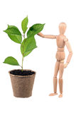 Dummy and cherry sapling Stock Photos
