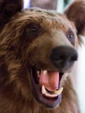 Dummy face of brown bear. Stock Photo