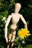 Dummy with flower Royalty Free Stock Image