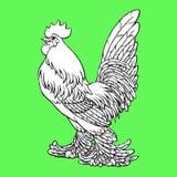 Dumna kogut kolorystyka na zieleni Obraz Royalty Free
