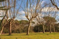 Dumni drzewa z długimi rękami Obraz Stock