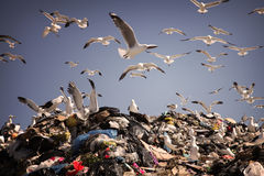 At the dump Royalty Free Stock Images