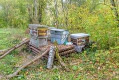 Dump von alten hölzernen Bienenstöcken, verlassen im Holz Lizenzfreies Stockfoto