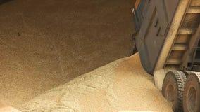 Dumpa korn från lastbilen lager videofilmer