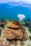 Dumpad plastpåse som svävar bredvid en korallrev Arkivfoto