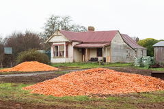 Dumped Carrot Crop Tasmania. Piles of harvested carrots dumped in paddock near abandoned farm house, rural Tasmania, Australia Royalty Free Stock Photo