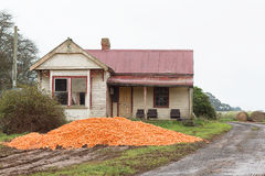 Dumped Carrot Crop Tasmania. Piles of harvested carrots dumped in paddock near abandoned farm house, rural Tasmania, Australia Royalty Free Stock Images
