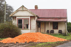 Dumped Carrot Crop Tasmania. Piles of harvested carrots dumped in paddock near abandoned farm house, rural Tasmania, Australia Stock Photos