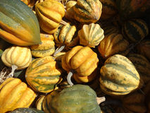Dumpling squash, Cucurbita pepo Royalty Free Stock Photos
