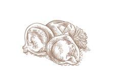 Dumplings and green parsley Stock Photo