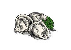 Dumplings and green parsley Stock Photos