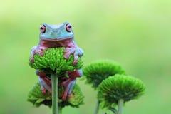 Dumpy лягушка сидя на бутоне Стоковое Изображение