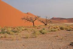 Duna 45, deserto de Namib Imagens de Stock
