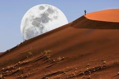 Duna che cammina nel deserto di Namib Fotografia Stock Libera da Diritti
