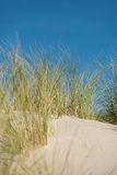 Duna con la sabbia e l'erba Fotografie Stock