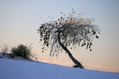Duna de areia com árvore Fotos de Stock Royalty Free