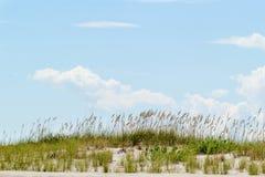Duna de areia e aveia alta do mar com o céu azul no fundo Fotografia de Stock Royalty Free