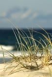 Duna de areia na praia Imagem de Stock Royalty Free
