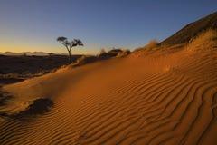Duna de areia no por do sol Imagens de Stock