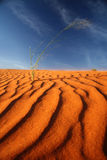 Duna de areia vermelha Namíbia de Kalahari Fotos de Stock Royalty Free