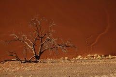 Duna de arena del árbol y del desierto Imagen de archivo libre de regalías