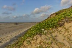 Duna de arena en una playa en el Golfo de México Foto de archivo libre de regalías