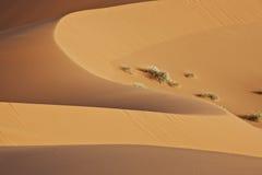 Duna de arena formada suave del desierto Fotografía de archivo libre de regalías