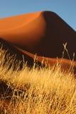 Duna de la hierba y de arena del desierto Fotos de archivo libres de regalías