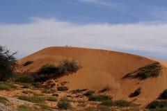 Duna di colore rosso del deserto di Kalahari Fotografia Stock