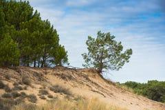 Duna di Pyla, il più alta duna di Europa Fotografia Stock