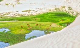 Duna di sabbia bianca stupefacente nel deserto Immagine Stock Libera da Diritti