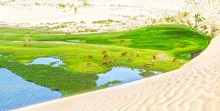 Duna di sabbia bianca stupefacente nel deserto Fotografie Stock