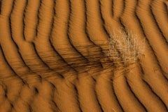 Duna di sabbia namibiana Fotografia Stock Libera da Diritti