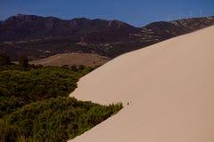 Duna e árvores de areia Fotos de Stock Royalty Free