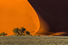 Duna 40 e árvores no nascer do sol Imagens de Stock Royalty Free